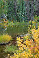 Fall color dotting the shore of a sub-alpine lake. Okanogan National Forest Washington USA