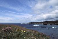 Pacific Ocean viewed from the blooming Mendocino Headlands, Mendocino California
