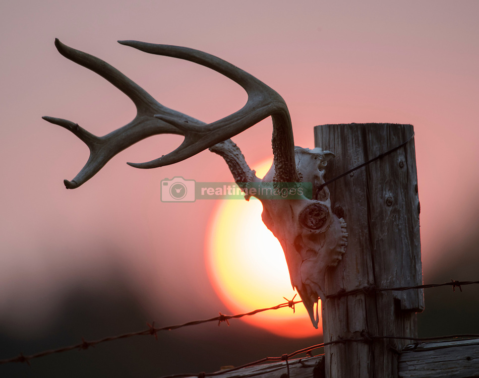 August 21, 2017 - Roseburg, OREGON, U.S - Smoke from a nearby 10,000-acre wildfire burning in the Umpqua National Forest casts a pink, orange, and red cast to the setting sun as seen from a farm near Roseburg in western Oregon. (Credit Image: © Robin Loznak via ZUMA Wire)