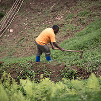 A farmer in Butembo, North Kivu, tends an area surrounding a water source where a reservoir for the community to collect clean water was built by the community with support from IMA and Tearfund.