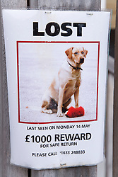 Poster for lost dog in the Thames Valley area,