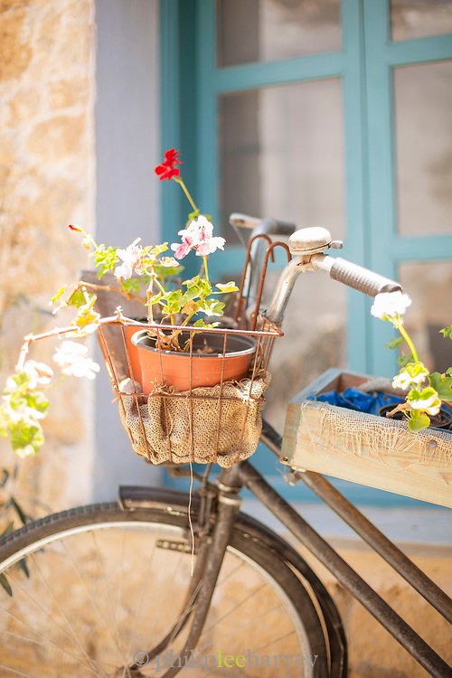 Close-up of potted plant in bicycle basket, Paphos, Cyprus