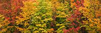 Autumn panorama, Vermont, USA