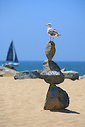 Seagull Standing On Rocks At The Beach
