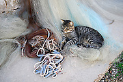 Cat sitting on fishing net, village of Vrboska, island of Hvar, Croatia