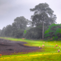 Tilt shift photo of cow pasture looks like a toy set, Cambodia