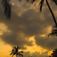 Palm tree shilhouettes at sunset, Anaehoomalu