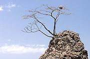 Rock Tree Sky