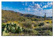 Memorial cross and cacti vegetation along North Beeline Highway, Tonto National Forest, Arizona. Nikon D500, 18-35mm @ 8mm (27mm in full frame), f14, EV-0.33, 1/800sec, ISO500, Aperture priority