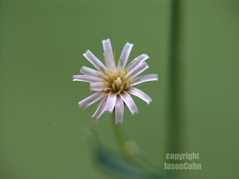 A wildflower in Glacier National Park, Montana. Photo by Jason Cohn