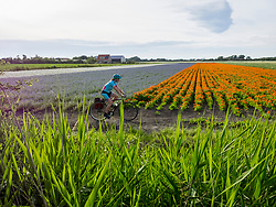 Mature woman riding bicycle through flower fields