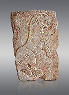Hittite relief sculpted orthostat panel of a lion from Tell Halaf, ancient Guzana, Syria, iX cent BC, Louvre Museum. Cat no 19804. Grey background