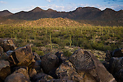 Spiral petroglyph on Signal Hill in Saguaro National Park