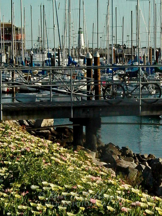 Santa Cruz Harbor ~ Walton Lighthouse ~ 0840