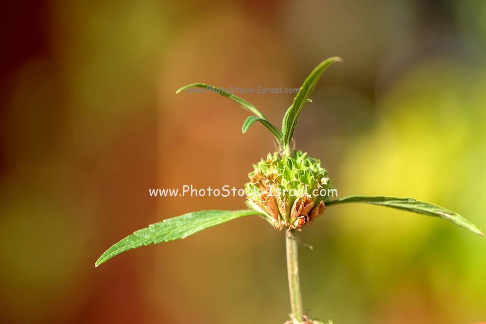 Flowers in a garden soft focus