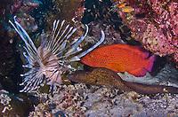 Aka Jima Diving, Kerama Islands, Okinawa, Japan