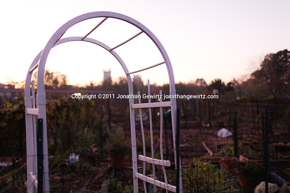 An arch arbor in a community garden. WATERMARKS WILL NOT APPEAR ON PRINTS OR LICENSED IMAGES.
