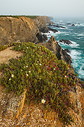 Surf and flowers at Cabo Sardao