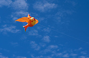funny fish kite in the sky