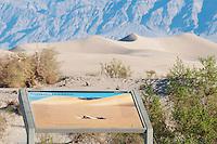 An interpretive exhibit at Mesquite Flat sand dunes features a photo of a Mojave desert sidewinder, Crotalus cerastes cerastes,  by wildlife photographer Dan Suzio. Death Valley National Park, California