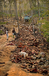 Men unload cow and goat carcasses at a dump that was once filled with vultures January 30, 2005 near Chandigarh, India. Farmers lament the fact that there are no longer any vultures to clear the rotting debris away quickly. Thebird has been dying rapidly from eating the poisened carcasses of cattle that had the drug Diclofenic used  to aleviate pain. (Ami Vitale)<br />