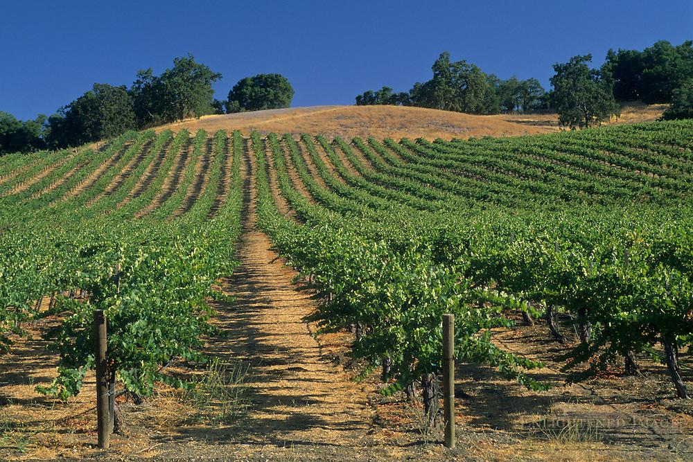 Vineyards along Chimney Rock Road, Paso Robles, San Luis Obispo County, California