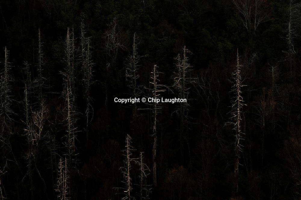 landscape, photo, stock, photography, image,