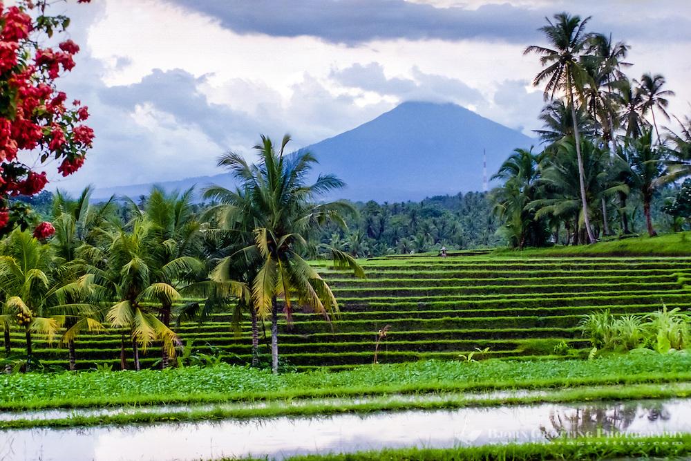 Bali, Tabanan, Kerambitan. Gunung Batukau seen from Kerambitan. Usually the mountain is covered by clouds.