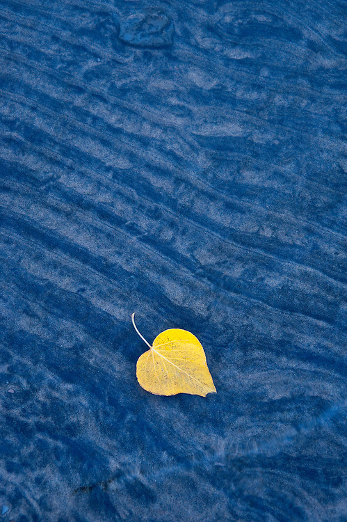 A single hello leaf on the bank of Lake Tahoe before a rain storm.