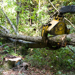 A skidder pulls a tree out of the woods as part of a selective harvest.  Dartmouth College forest - Second College Grant, NH.  Green certified.