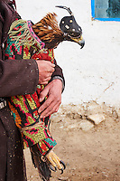 Mongolie, province de Bayan-Olgii, chasseur à l'aigle Kazakh, l'aigle royal est protegé dans une couverture pour le voyage // Mongolia, Bayan-Olgii province, Kazakh eagle hunter, Golden Eagle, packagingwrapping for travel
