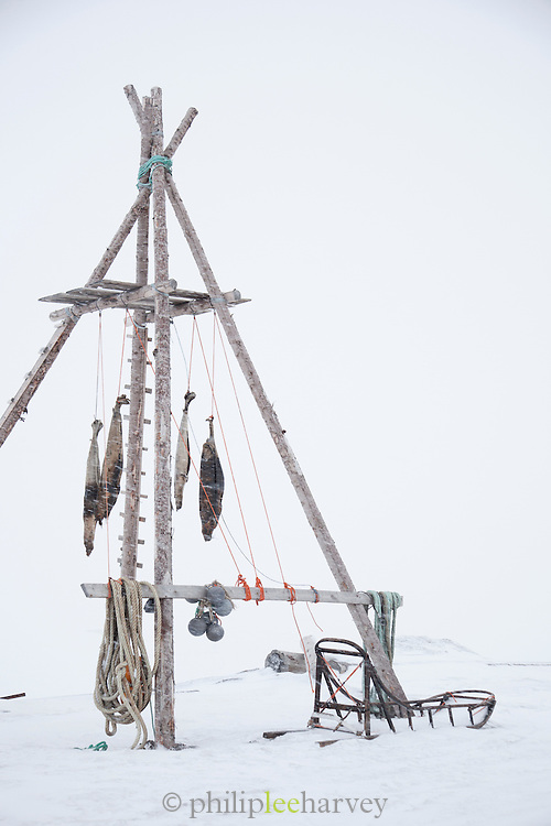 Seals hanging at a trappers hut near Longyearbyen, Spitsbergen. Spitsbergen is the largest island of the arctic archipelago Svalbard, of Norway