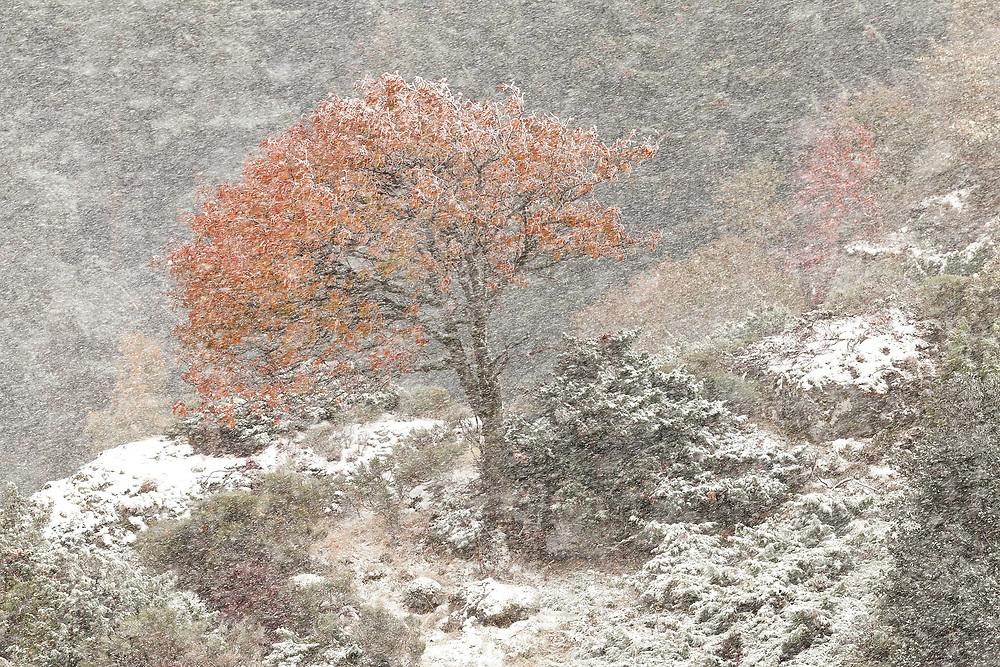 Col du croix st. Robert first snow in 2015