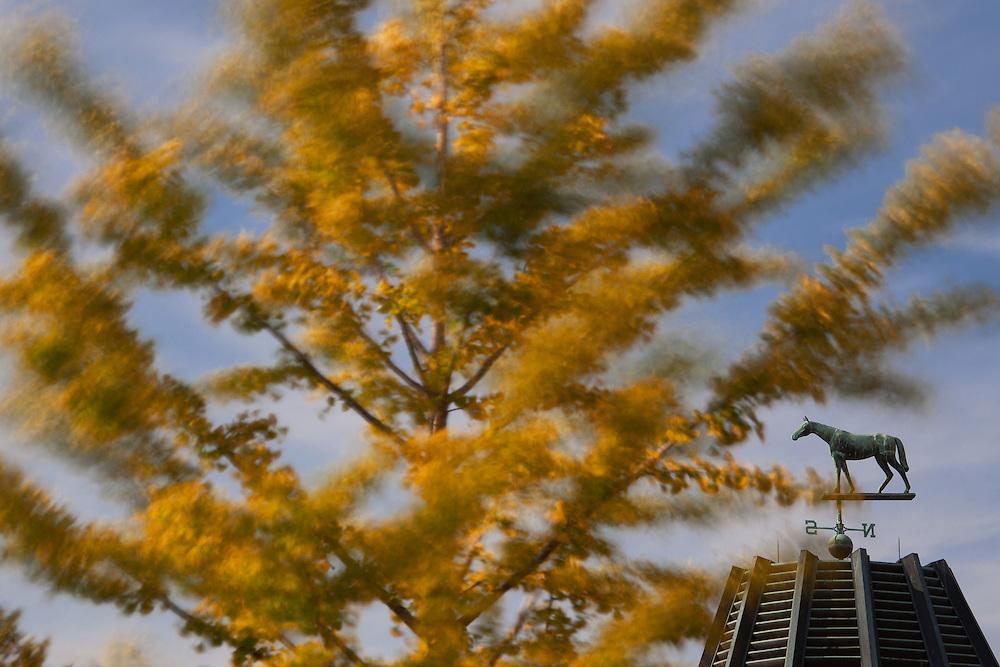 Keeneland Fall Meet  2010