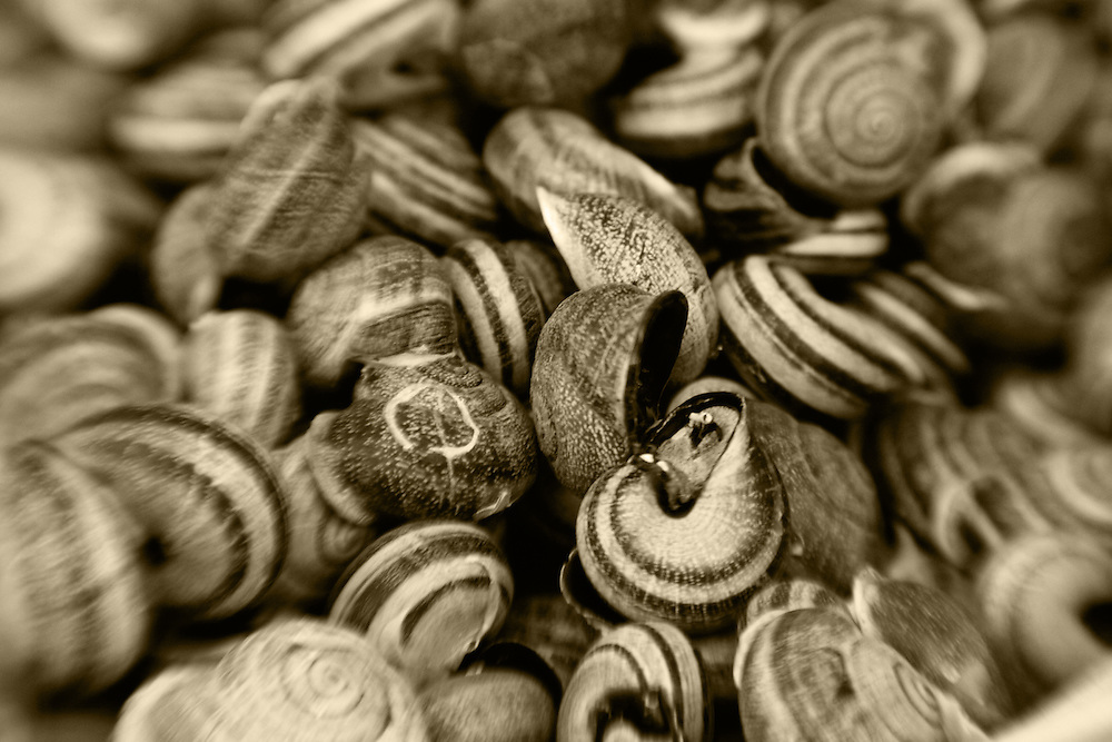 snal shells sepia toned,horizontal