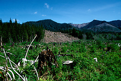 WA: Washington State; Olympic National Park, Logging at edge of Park        .Photo Copyright: Lee Foster, lee@fostertravel.com, www.fostertravel.com, (510) 549-2202.Image: waolym215