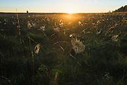 A calcareous fen covered in cobwebs in sunrise, Lake Kaņieris, Kemeri National Park (Ķemeru Nacionālais parks), Latvia Ⓒ Davis Ulands | davisulands.com