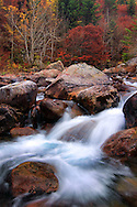 The Gesso river in its higher course within the Alpi Marittime Natural Park in Piedmont, Italy, surrounded by an amazing inventory of trees and bushes in autumn dress.