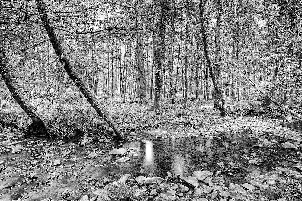 Catskills, NY.<br /> On a hot summer day, my brother in law invited me up to see the woodlot he had recently cleared.  He is a forester, and leaves his workplaces more open and thriving than when he found it.  Here, Bull Creek trickles through the forest in a low summer flow.