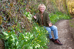 Carol Klein with primroses growing on a bank in a Devon hedgerow. Primula vulgaris