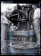 grapes cruching France circa 1920s