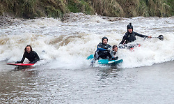 © Licensed to London News Pictures. 21/02/2019. Minsterworth, Gloucestershire, UK. Surfers ride the Severn Bore at Minsterworth, with some surfers falling off their boards. The bore this weekend is one of the highest of the year, a four star bore as the incoming tide comes up river creating a wave. Photo credit: Simon Chapman/LNP