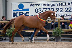 002, Naxcel V<br /> 3de phase BWP Keuring - Stal Hulsterlo - Meerdonk 2016<br /> © Hippo Foto - Dirk Caremans<br /> 19/03/16