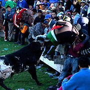 A painful experience for a spectator during a Bull fight in Copacabana, Bolivia as a bull charges into the crowd.  Although in pain the man was not seriously injured. The bull fight was part of the three day long festival of the Virgen de la Candelaria which also includes parades, dancing and drinking by the mainly indigenous Aymara communities in  the small town on the shores of Lake Titicaca in Bolivia.
