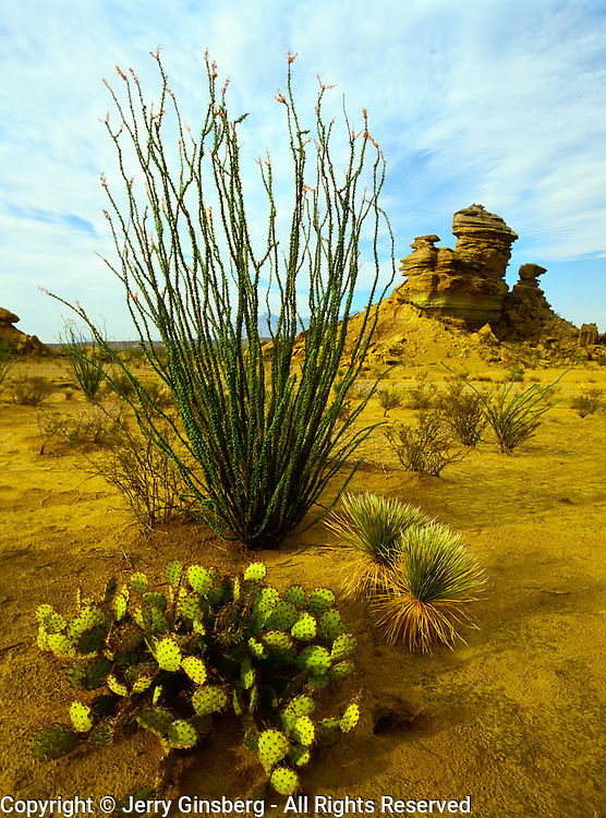 North America, United States, Southwest, West, Big Bend, Big Bend National Park. .Tornillo Flats in rugged Big Bend National Park in Southwest Texas.