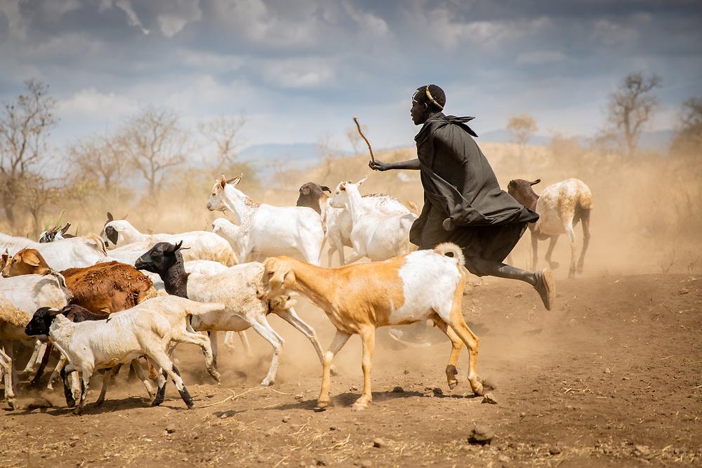 Maasai boy herding goats, Ngorongoro, Tanzania