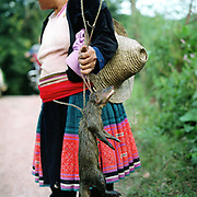 A Miao/Hmong ethnic minority woman wearing a modern printed traditional style pleated skirt stands with a wild animal which has been caught in a trap, San Yao San village, Yunnan Province, China. The People's Republic of China recognises 55 ethnic minority groups in China in addition to the Han majority. The ethnic minorities form 9.44% of mainland China and Taiwan's total population and the greatest number can be found in Yunnan Province, 34% (25 ethnic groups).