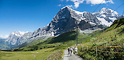 "Walk downhill from Eigergletscher train station (of the Jungfraujoch ""Top of Europe"" railway) under the north face of the Eiger (3970m / 13,020 ft elevation) to Alpiglen station in Grindelwald Valley, Canton of Bern, Switzerland, the Alps, Europe. The Eiger has the biggest north face in the Alps: 1800 vertical meters (or 5900 ft) of rock and ice. The Swiss Alps Jungfrau-Aletsch region is honored as a UNESCO World Heritage Site.The Swiss Alps Jungfrau-Aletsch region is honored as a UNESCO World Heritage Site. This image was stitched from multiple overlapping photos."