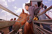 05 AUGUST 2000 - WILLIAMS, AZ: A competitor in the wild horse race calms his horse before the race at the 22nd Annual Cowpunchers' Reunion Rodeo in Williams, Arizona, Aug 5. In the wild horse race, a team of cowboys wrestle a horse that has never had a saddle on it to the ground, saddle the animal and ride it across the finish line in the rodeo arena.  The Cowpunchers' Reunion Rodeo is held for working cowboys from the ranches in Arizona and the region. PHOTO BY JACK KURTZ