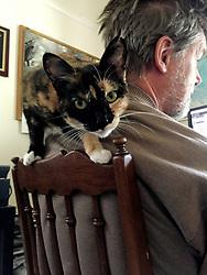 Zelda the cat prowls on the shoulder of her caretaker, Ross Cameron, in their Oakland, Calif. home, Friday, April 10, 2020. (Photo by Kathleen Kirkwood)